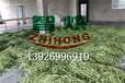 智烘牌豆角烘干房,热风循环豆角烘干机ZH-JN-HGJ03