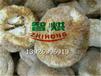 智烘牌山东济南能耗低的猴头菇烘干机,全天候不需要看着的猴头菇烘房生产商