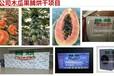 无锡智烘牌木瓜干燥系统干燥技术经验,木瓜烘干机什么牌子价格怎么样的ZH-JN-HGJ03