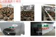 电量用得少的智烘牌核桃烘干机厂家,简单烘干流程的核桃干燥房系统ZH-JN-HGJ03