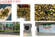 智烘牌雪菊烘干机组批发,新风预除湿烘干技术的雪菊干燥设备ZH-JN-HGJ03