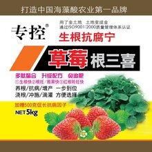 草莓根三喜防治草莓黑根红根烂根死苗沤根促进草莓快生根生壮根草莓养根抗病