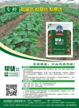 专治草莓苗期苗弱苗黄不生根生根慢红根多帮优果多果大杀菌剂
