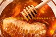 缅甸蜂蜜出口欧洲