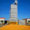 玉米烘干塔通過熱風溫度使糧食快速升溫