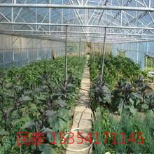 花卉大棚蔬菜大棚用几字钢骨架结实又实惠图片