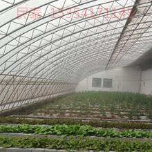 特别寒冷的地区种植养殖大棚用双膜骨架保温好图片