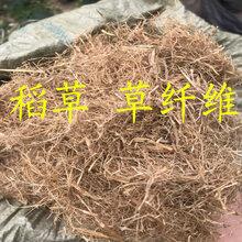 浙江杭州边坡绿化专用稻草草纤维量大从优图片