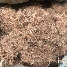 安徽宣城稻草草纤维山体绿化草纤维厂家直销量大从优图片