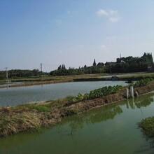 廣西柳州EM菌原液魚塘養殖除臭農業種植專用EM菌圖片