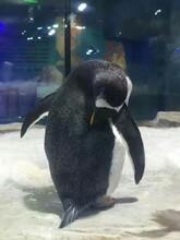 海洋动物表演租赁专业提供海洋生物展览表演