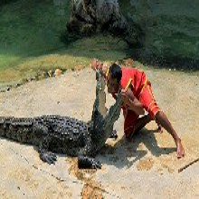 大型鳄鱼表演海洋生物商业展览低价巡演租售