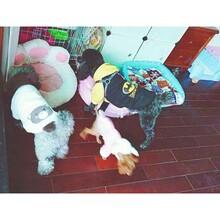 LuckyDog长沙家庭宠物寄养散养自由