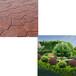 供青海压花路面和西宁园林绿化公司优质