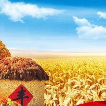 成都农业企业形象设计/农业VI设计/农业企业VI设计/农产品VI形象设计/农产品视觉设计公司