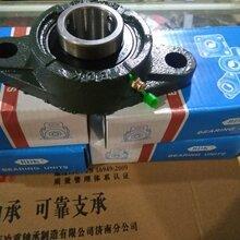 山东省滨州市供应BDK不锈钢带座外球面轴承UCP308图片