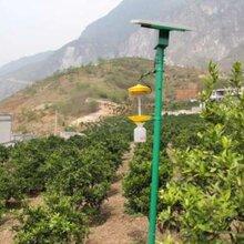 黑龙江富锦市太阳能杀虫灯厂家