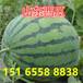 西瓜批發西瓜產地西瓜供應山東大棚西瓜產地直銷價格