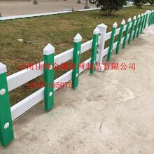 供应pvc绿化护栏网-pvc护栏高度-0.5高pvc道路隔离护栏图片