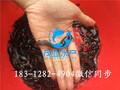埃及塘鲺鱼苗,埃及鱼苗销售,革胡子鲶鱼苗茂业水产图片