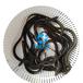白鳝图片介绍-白鳝鱼苗的营养价值鳗鱼苗养殖技术