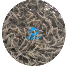 銀鱈魚苗市場行情價上海銀鱈魚苗批發銀鱈魚苗養殖圖片