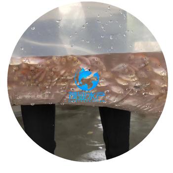观赏红罗非鱼苗哪里有?广东茂业水产包送/广西北海红罗非鱼苗价格