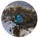 5月新苗揭陽黃顙魚苗批發中/廣東茂業水產/云浮黃骨魚苗供應