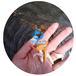 遂川縣俄羅斯金絲鯇魚苗批發吉安金絲草魚苗報價江西金草魚苗養殖