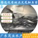 茂名優質茂業水產斑點叉尾鮰魚苗廠家直銷