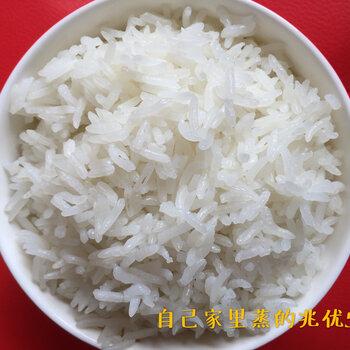 杂交稻兆优5455
