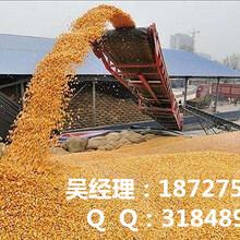 辽宁收购玉米民发收购玉米实力厂家图片
