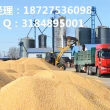 谁知道哪里大量收购玉米,玉米收购价格(优质厂家)图片