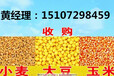 哪里大量收购玉米,收购玉米行情,民发收购玉米(优质厂家)