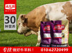 肉母牛专用预混料饲料