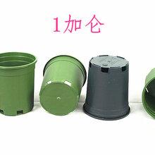 厂家生产批发优质塑料花盆育苗花盆加仑盆育苗容器型号齐全图片