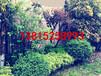 苏州别墅景观工程公司、苏州别墅景观、苏州别墅绿化工程,苏州庭院景观绿化设计
