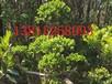 供应苏州景观绿化苗木,苏州庭院绿化设计,苏州别墅景观设计,苏州别墅庭院景观绿化工程施工
