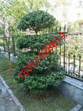 苏州别墅景观设计、苏州庭院设计公司、庭院果树苗木,苏州别墅苗木果树