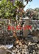 蘇州花木苗木市場,苗木造型樹批發市場,景觀樹盆景樹樁,蘇州綠化苗木