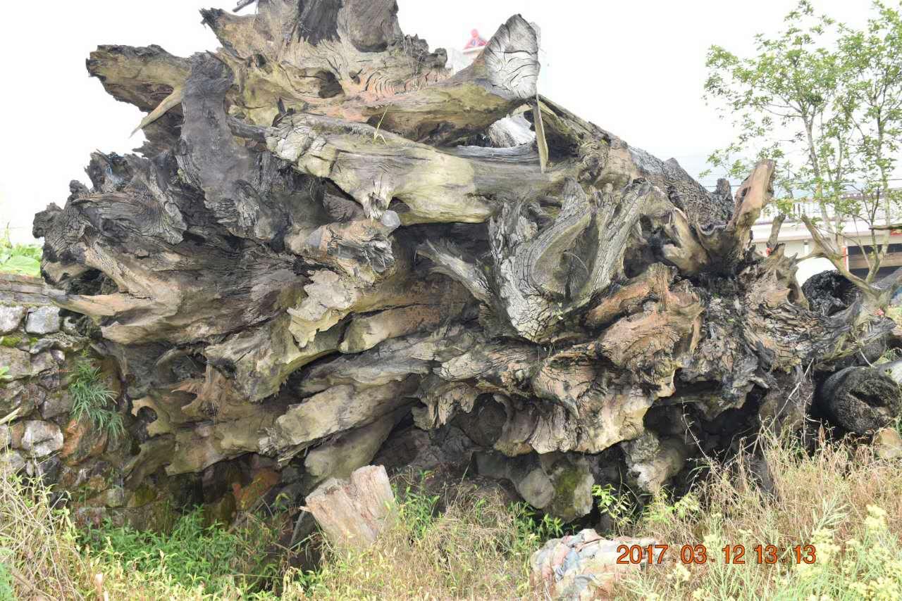 普通料子的乌木阴沉木价格多少?哪里有人收购乌木?