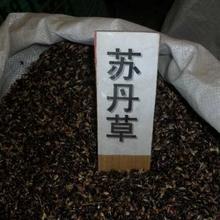 苏丹草种植技术