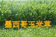 黑麦草种子价格(亿粒鑫种业)
