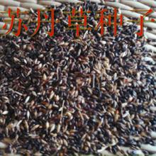 高丹草一亩种多少斤种子