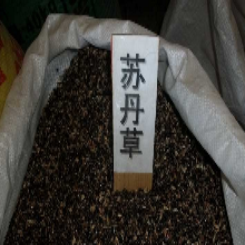 山东(亿粒鑫)墨西哥玉米苏丹草高丹草黑麦草