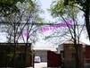 北京祥盛源电气设备有限公司