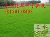 云南哪有卖高速边坡护坡草种花种