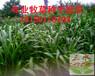 云南迪庆护坡草种哪家便宜?有什么品种