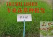 草种怎么混播?云南高速边坡现在适合种植什么草种,怎么种?