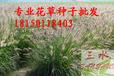 三水园林供应全网最低边坡资材花草种子价格透明